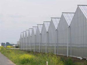 поликарбонат в сельском хозяйстве